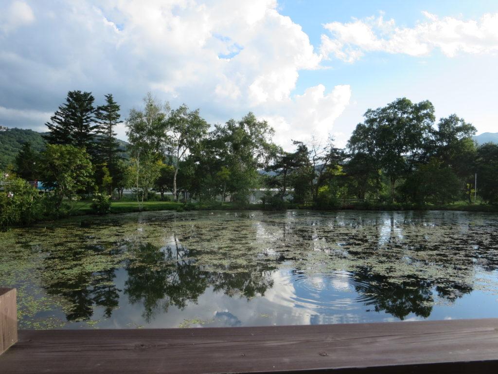 白樺湖のコンビニローソンの前の池