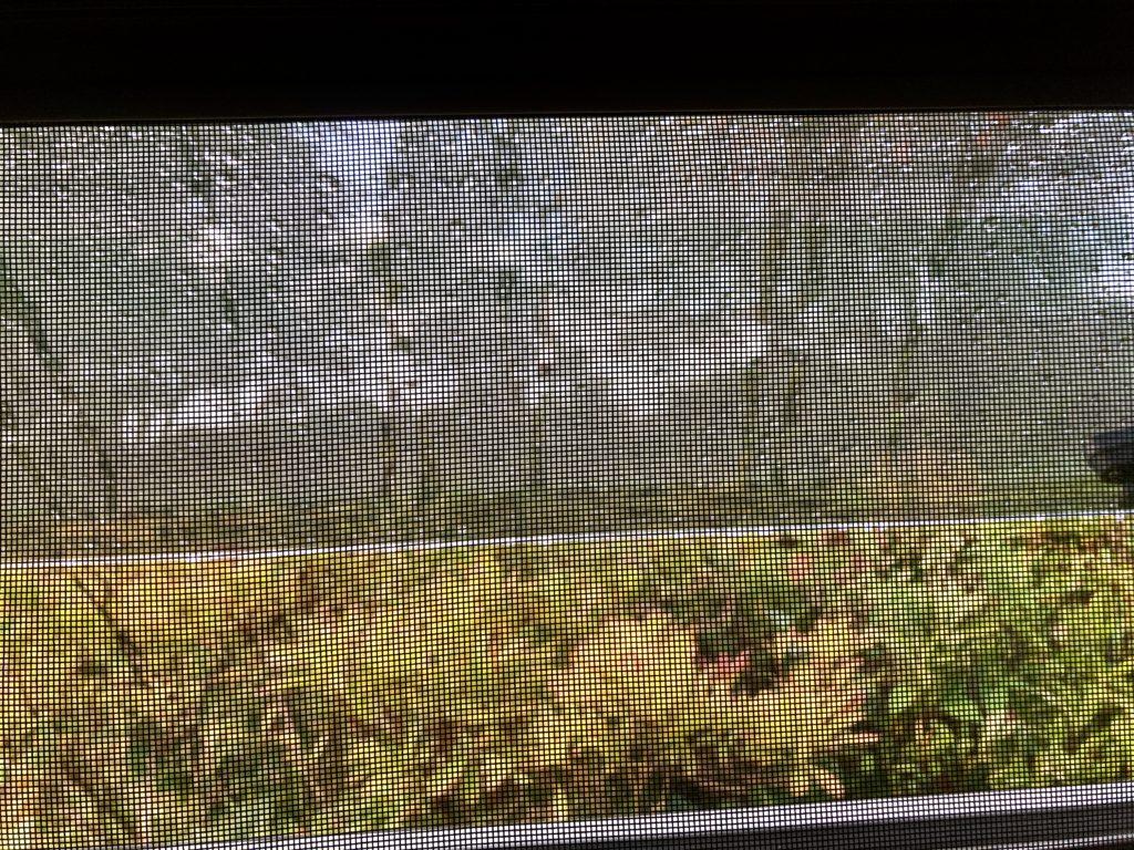 武尊牧場キャンプ場に幌馬車くんの軽キャンピングトレーラーで行く車中泊のキャンプ 幌馬車くんの窓