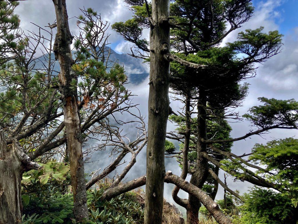 パルコール嬬恋ゴンドラ山頂からの四阿山登山の写真