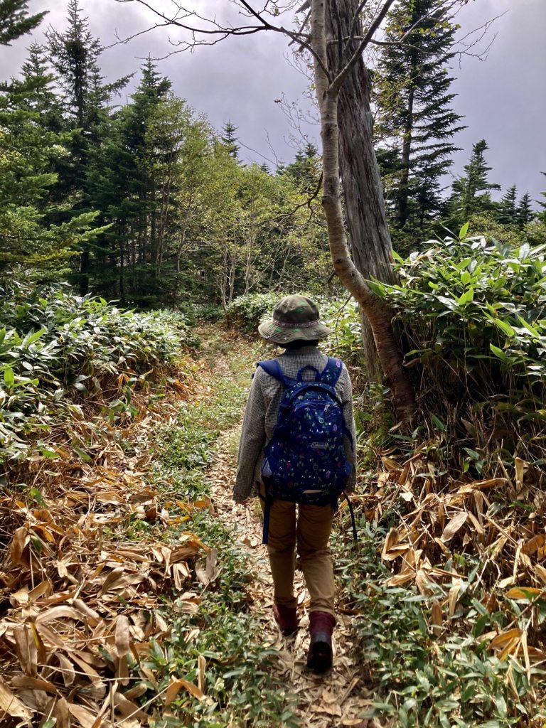 パルコール嬬恋ゴンドラ山頂からの四阿山登山ルートの熊笹の道