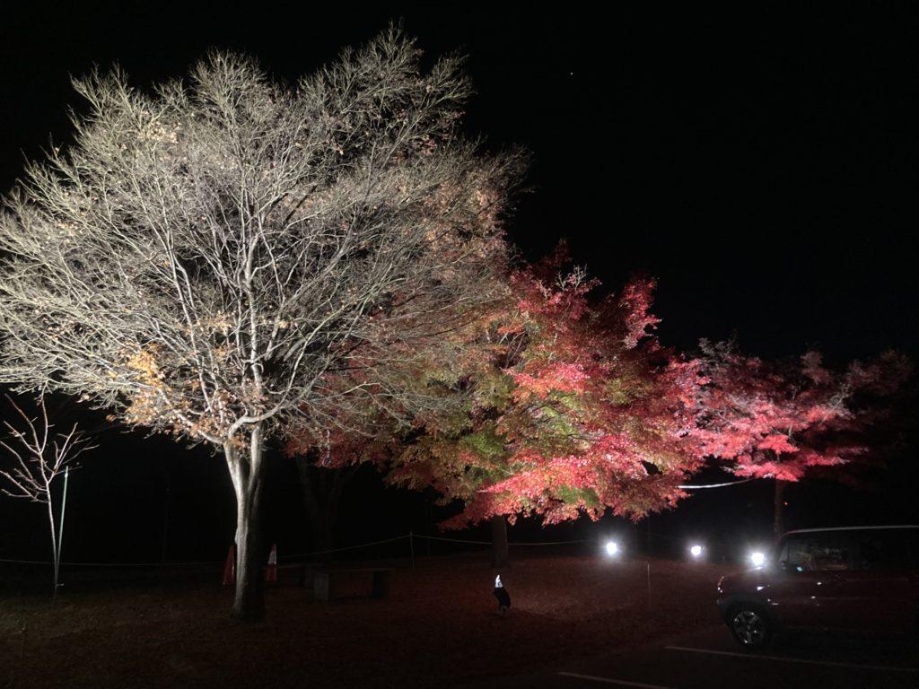 軽キャンピングトレーラーの幌馬車くんで行く渋川市総合公園キャンプ場で紅葉ライトアップ