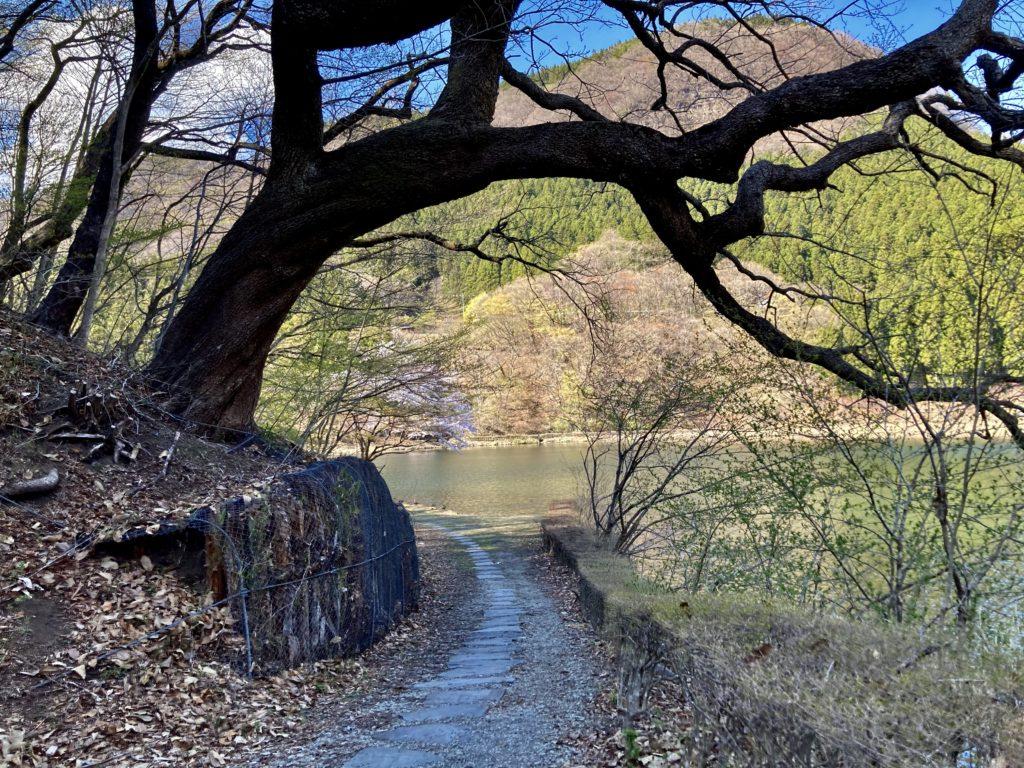 碓井湖の湖畔周辺の遊歩道ハイキング