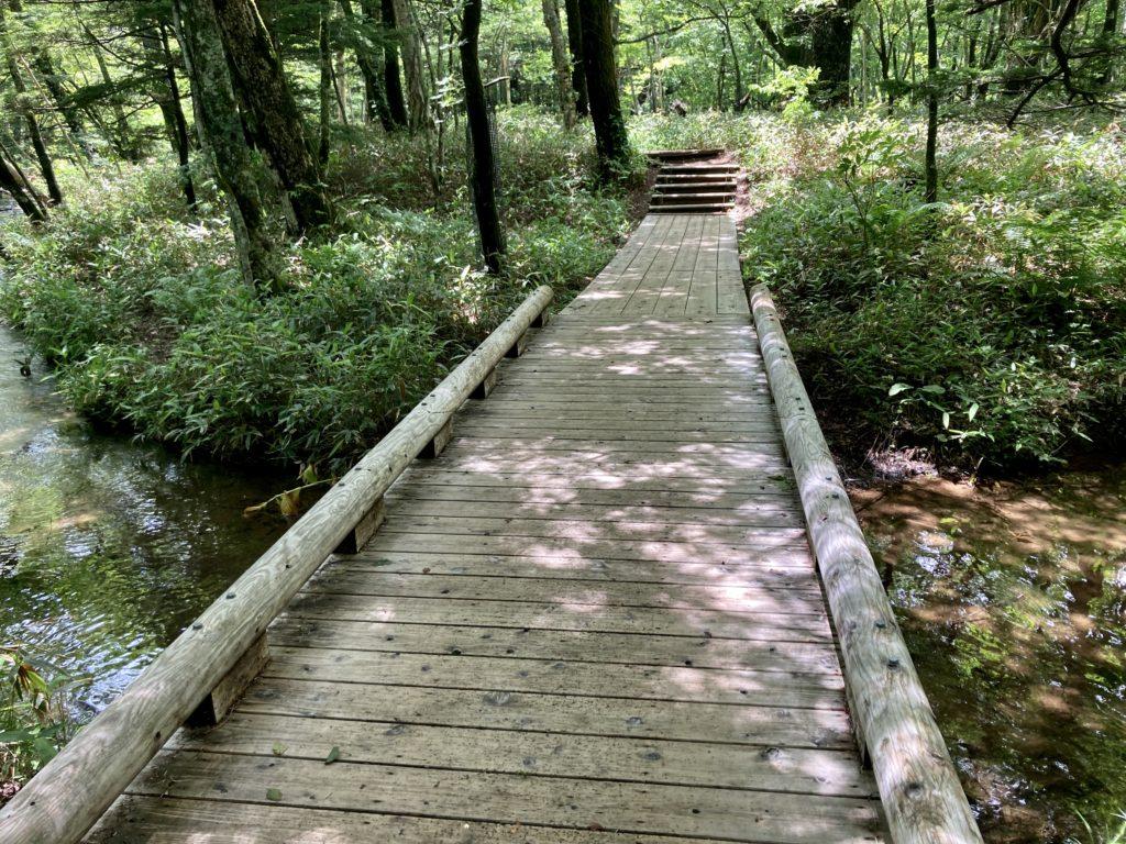 湯の湖の湯滝のハイキングコースの木道
