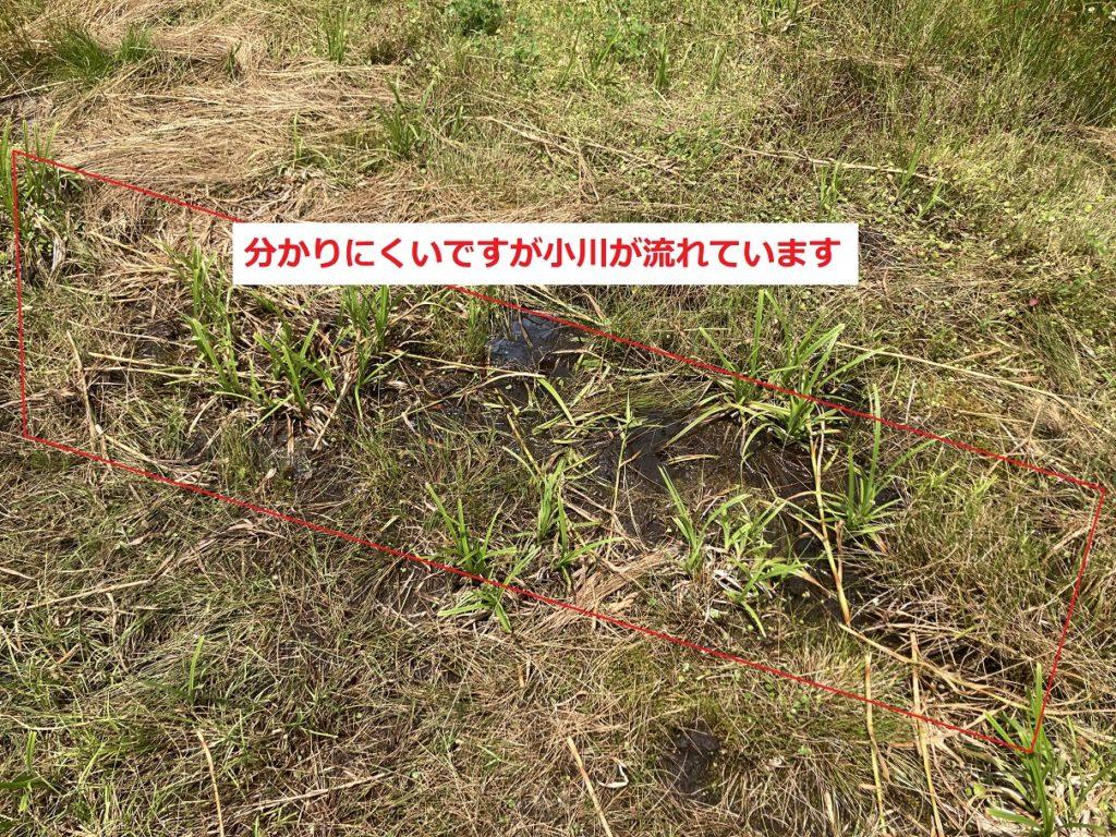 志賀高原の木戸池キャンプ場は湿地帯なので足場が悪い