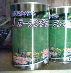 西洋芝の種