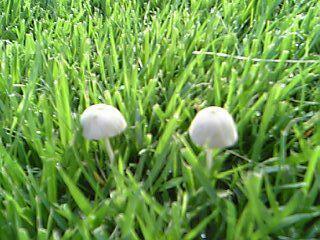 芝生つくばグリーンときのこ