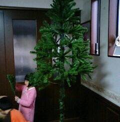 クリスマスツリーの枝